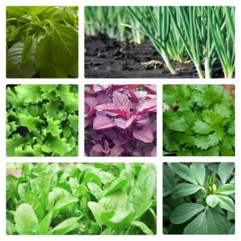 7 Variety of leafy vegetable seeds. Get 7 grow bags free